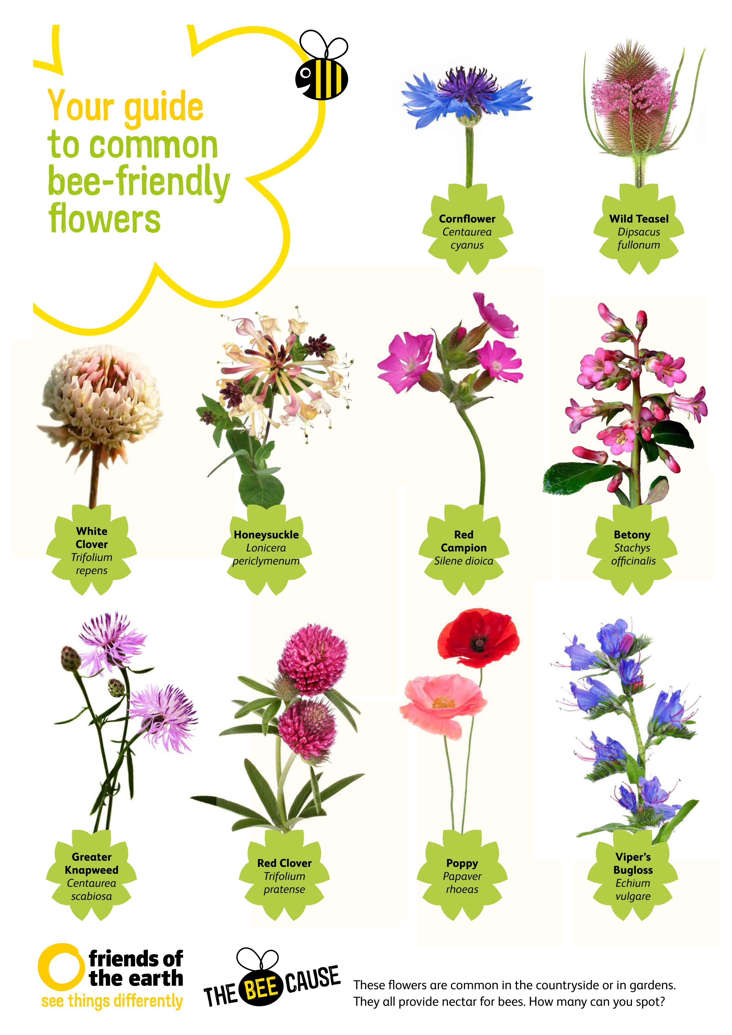 bee keeping manual from object dreams